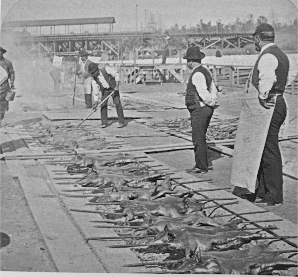Georgia Barbecue - Tending the pits at a Georgia-style barbecue at the 1895 Cotton States and International Exposition, Atlanta